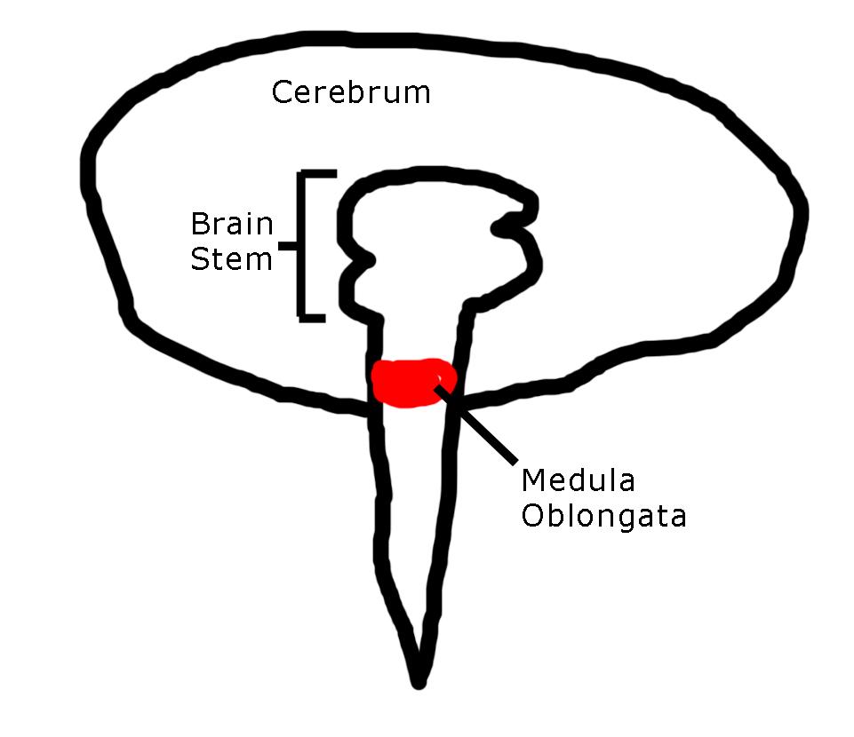 hl biology
